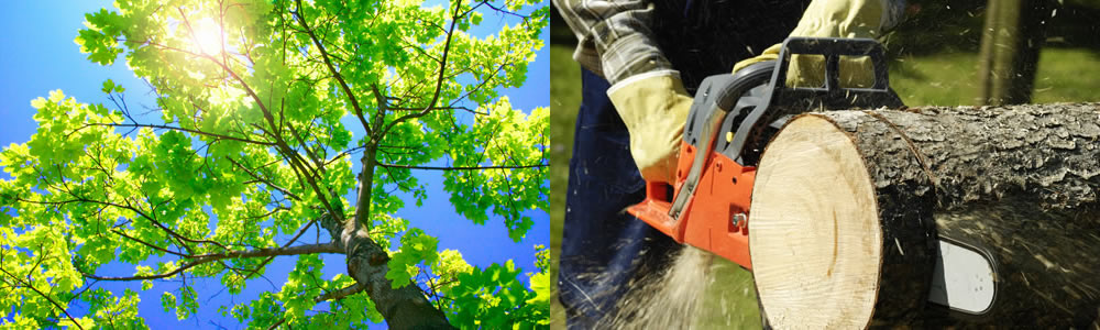 Tree Services Frisco